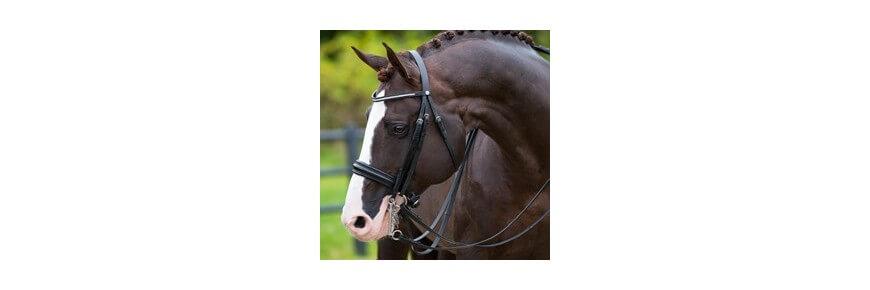 Morso Inglese e Filetti per Cavalli: Pessoa ad Anelli Spagnolo