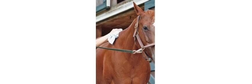 Salviette Detergenti per la Pulizia dei Cavalli