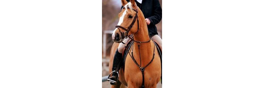 Martingala Equitazione per Cavalli da Monta Inglese