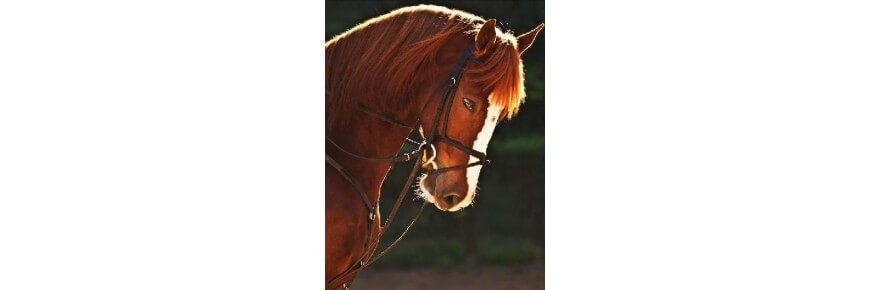 Martingala Equitazione Martingale per Cavalli da Endurance