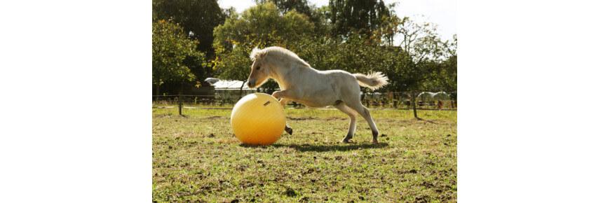 Giochi per Cavalli: Palla Gioco per Cavallo
