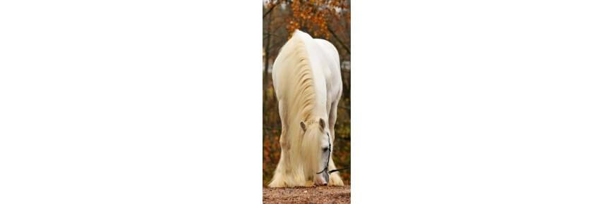 Pulizia Cavallo Prodotti e Accessori Online